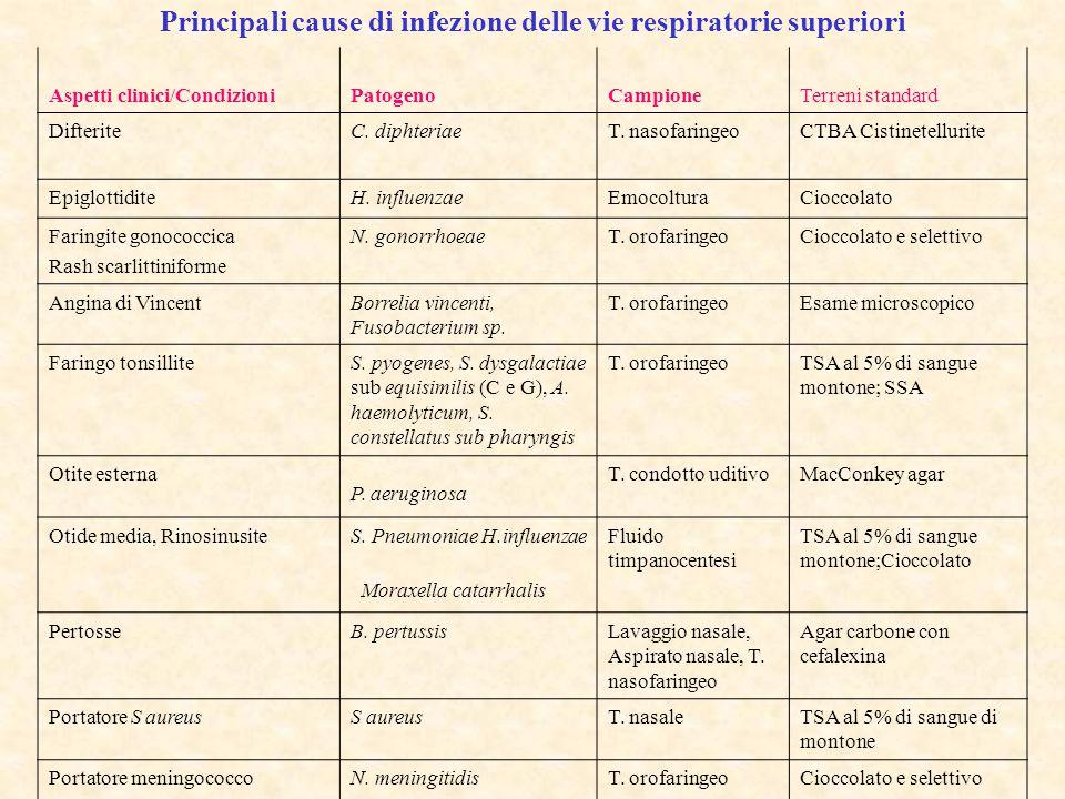 Principali cause di infezione delle vie respiratorie superiori Aspetti clinici/CondizioniPatogenoCampioneTerreni standard DifteriteC. diphteriaeT. nas