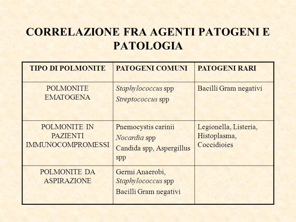 CORRELAZIONE FRA AGENTI PATOGENI E PATOLOGIA TIPO DI POLMONITEPATOGENI COMUNIPATOGENI RARI POLMONITE EMATOGENA Staphylococcus spp Streptococcus spp Ba