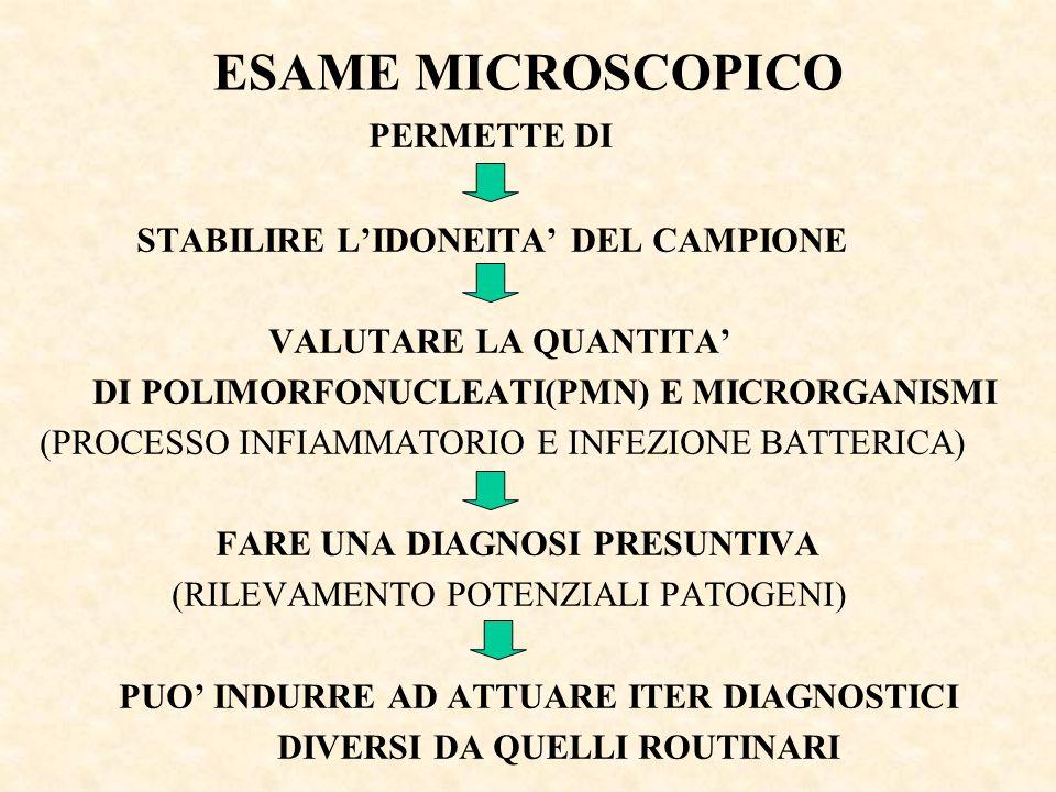 ESAME MICROSCOPICO PERMETTE DI STABILIRE L'IDONEITA' DEL CAMPIONE VALUTARE LA QUANTITA' DI POLIMORFONUCLEATI(PMN) E MICRORGANISMI (PROCESSO INFIAMMATO