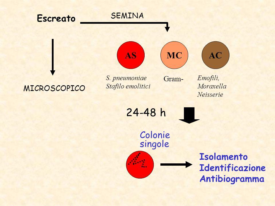 Escreato ASACMC 24-48 h SEMINA MICROSCOPICO Colonie singole Isolamento Identificazione Antibiogramma Gram- S. pneumoniae Stafilo emolitici Emofili, Mo