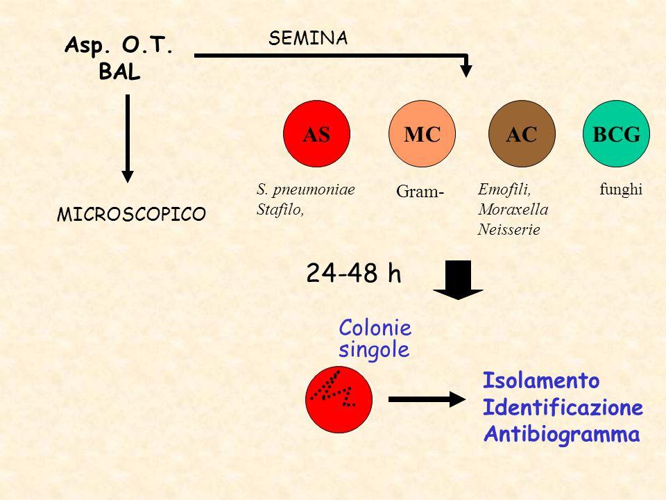 Asp. O.T. BAL ASACMC 24-48 h SEMINA MICROSCOPICO Colonie singole Isolamento Identificazione Antibiogramma BCG Gram- S. pneumoniae Stafilo, funghiEmofi