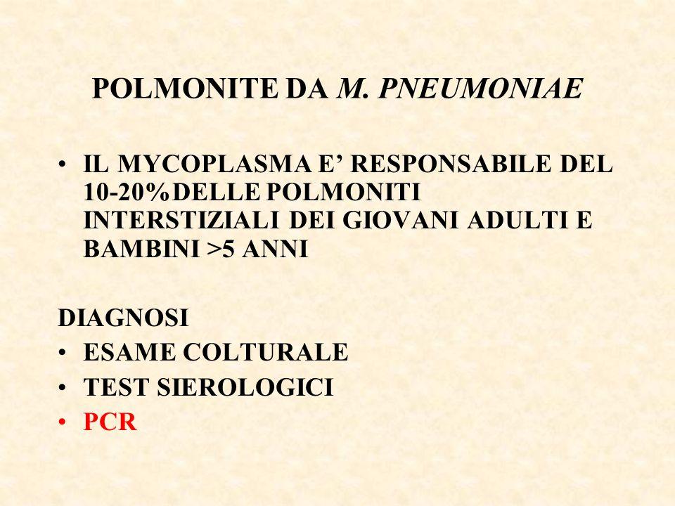 POLMONITE DA M. PNEUMONIAE IL MYCOPLASMA E' RESPONSABILE DEL 10-20%DELLE POLMONITI INTERSTIZIALI DEI GIOVANI ADULTI E BAMBINI >5 ANNI DIAGNOSI ESAME C