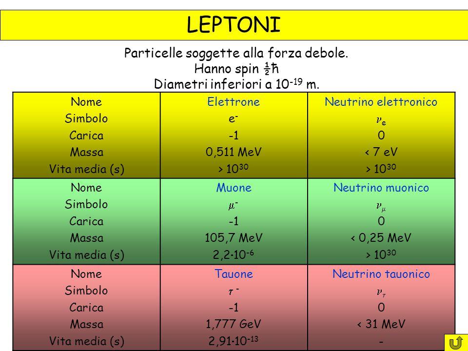 LEPTONI Nome Simbolo Carica Massa Vita media (s) Elettrone e - 0,511 MeV > 10 30 Neutrino elettronico e 0 < 7 eV > 10 30 Nome Simbolo Carica Massa Vita media (s) Muone  - 105,7 MeV 2,2  10 -6 Neutrino muonico  0 < 0,25 MeV > 10 30 Nome Simbolo Carica Massa Vita media (s) Tauone  - 1,777 GeV 2,91  10 -13 Neutrino tauonico  0 < 31 MeV - Particelle soggette alla forza debole.