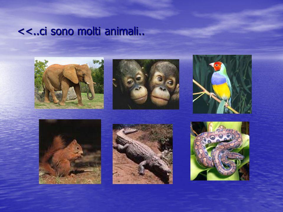 <<..ci sono molti animali..