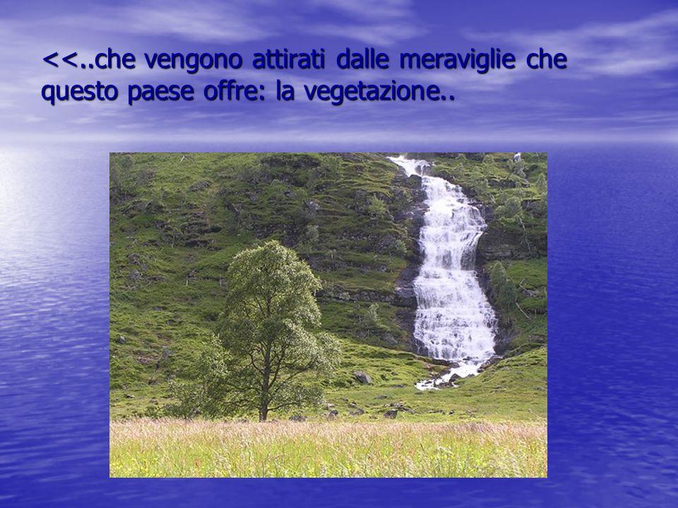 <<..che vengono attirati dalle meraviglie che questo paese offre: la vegetazione..