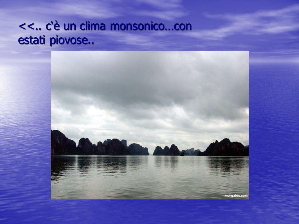 <<.. c'è un clima monsonico…con estati piovose..