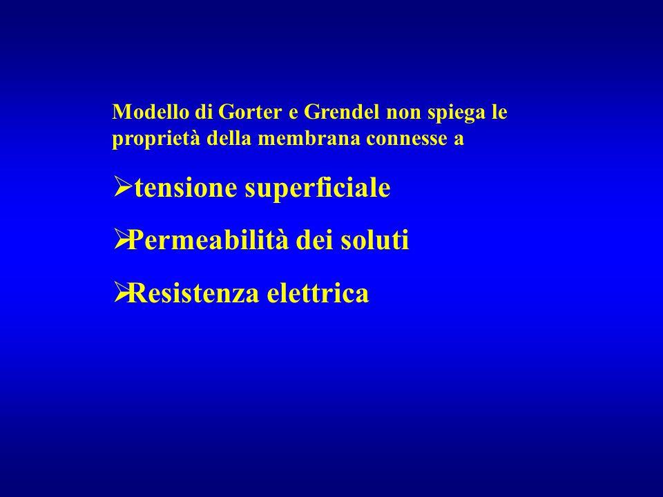Modello di Gorter e Grendel non spiega le proprietà della membrana connesse a  tensione superficiale  Permeabilità dei soluti  Resistenza elettrica