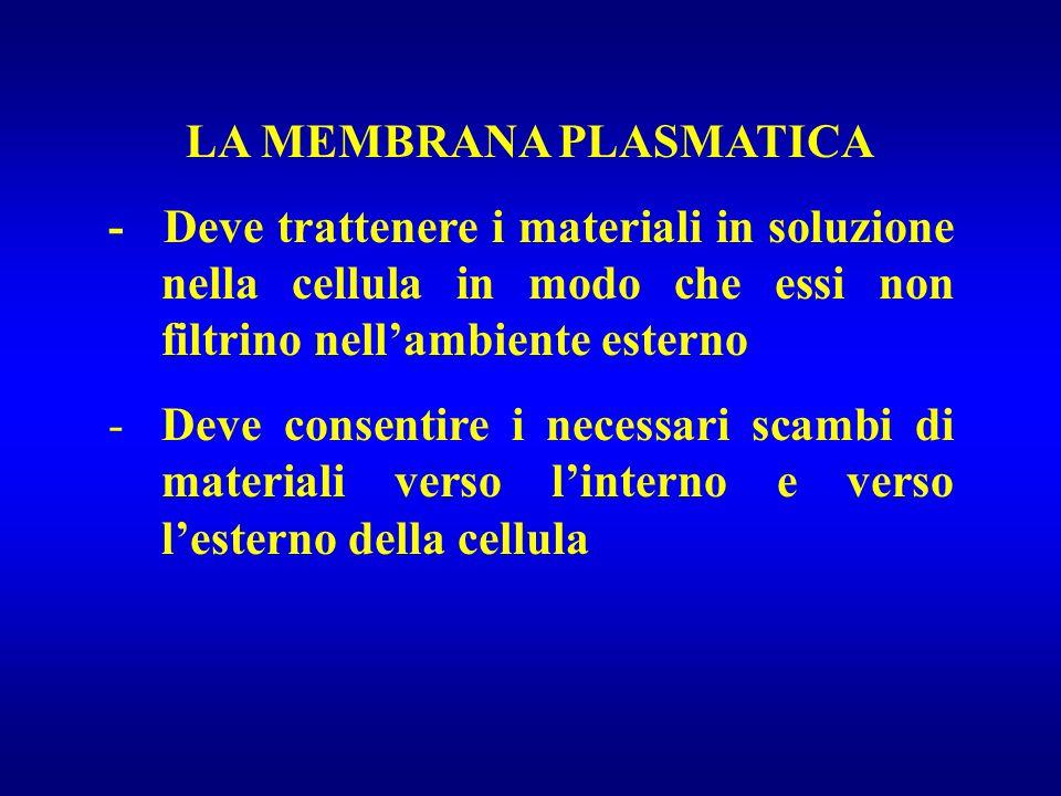 LA MEMBRANA PLASMATICA - Deve trattenere i materiali in soluzione nella cellula in modo che essi non filtrino nell'ambiente esterno -Deve consentire i