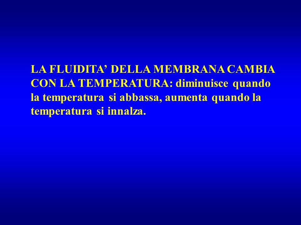 LA FLUIDITA' DELLA MEMBRANA CAMBIA CON LA TEMPERATURA: diminuisce quando la temperatura si abbassa, aumenta quando la temperatura si innalza.
