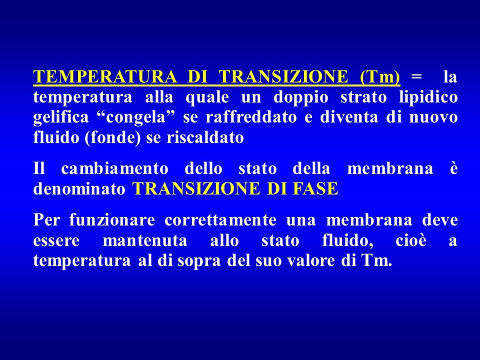 """TEMPERATURA DI TRANSIZIONE (Tm) = la temperatura alla quale un doppio strato lipidico gelifica """"congela"""" se raffreddato e diventa di nuovo fluido (fon"""