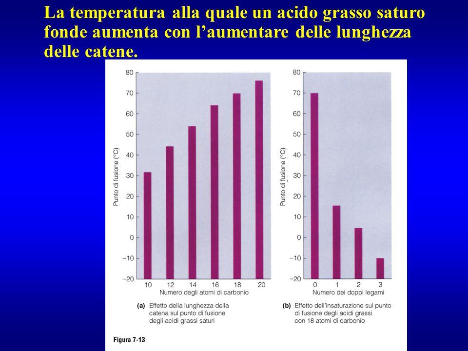 La temperatura alla quale un acido grasso saturo fonde aumenta con l'aumentare delle lunghezza delle catene.