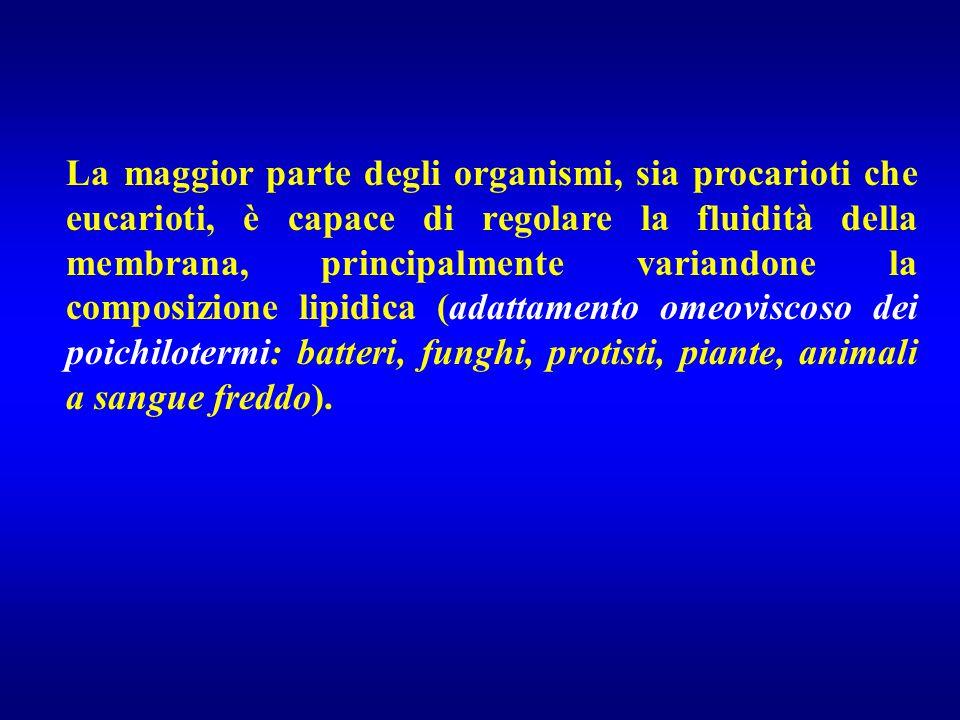 La maggior parte degli organismi, sia procarioti che eucarioti, è capace di regolare la fluidità della membrana, principalmente variandone la composiz