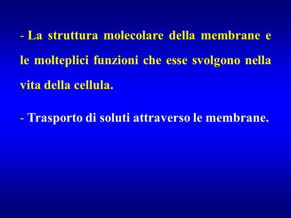 - La struttura molecolare della membrane e le molteplici funzioni che esse svolgono nella vita della cellula. - Trasporto di soluti attraverso le memb