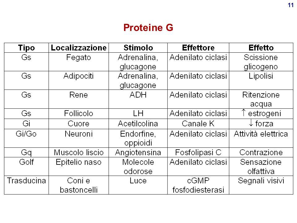 10 Proteina G (GTP-binding protein)  Proteina G =  +  +    : unità catalitica  -GDP, inattiva  -GTP, attiva  s, stimola l'effettore  i, inib