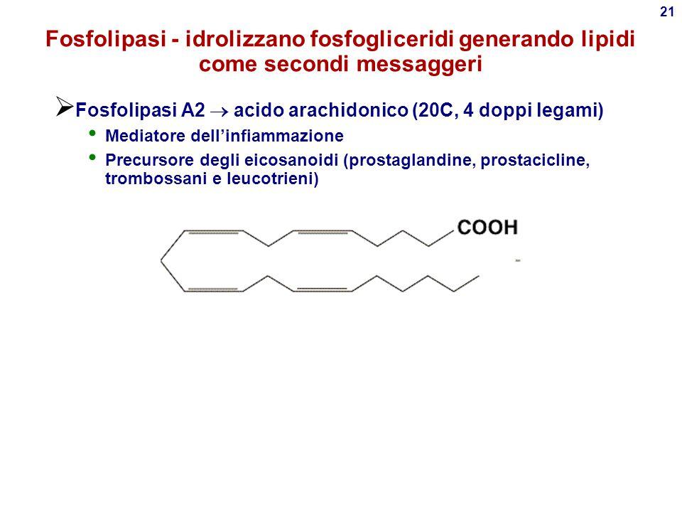 20 Sistema fosfolipasi C e fosfatidil inositolo PIP 2  DAG + IP 3  DAG: protein kinasi C  mitosi  crescita  IP 3 : rilascio Ca ++ da vescicole 