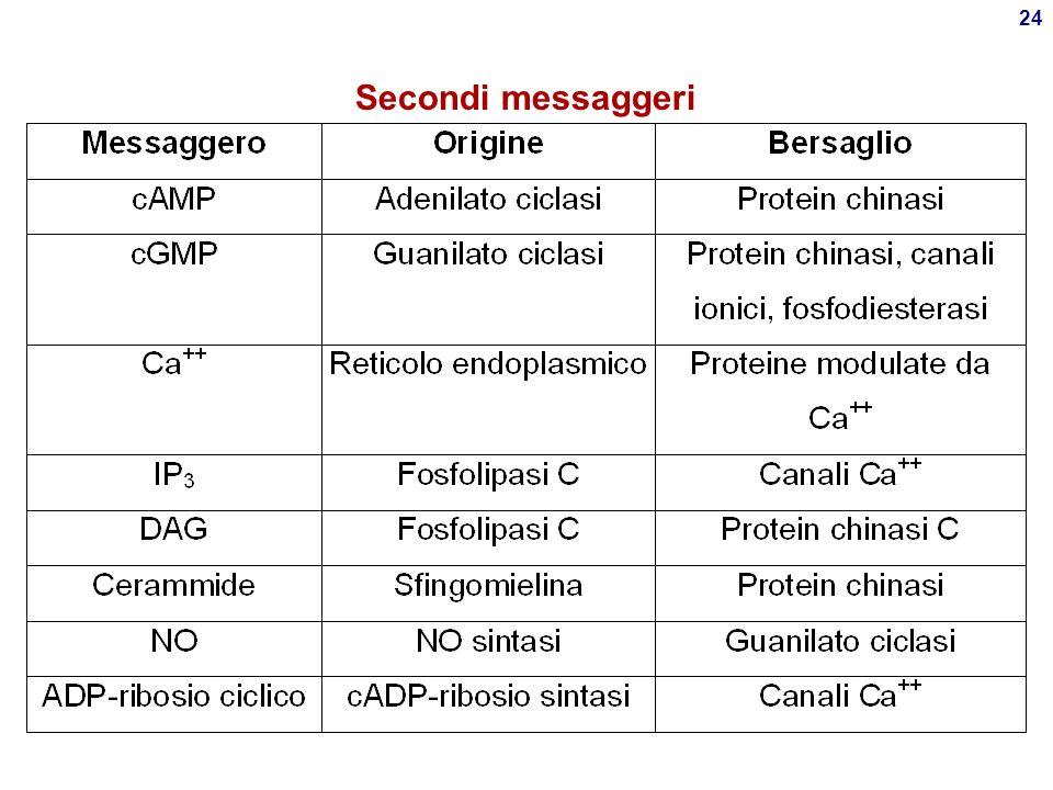 23 Leucotrieni  Derivano da acido arachidonico via lipoossigenasi (LOX) Deficit di LOX in disordini mieloproliferativi (  trombossano), immunologici