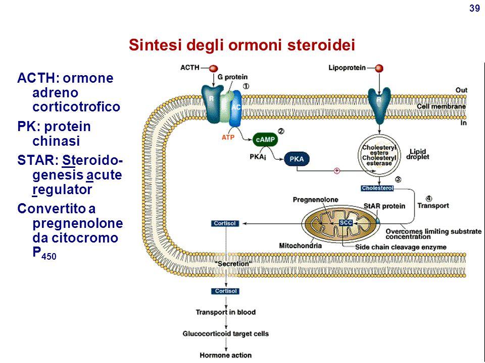 38 Ormoni della corteccia surrenalica  Glucocorticoidi Steroidi a 21C Stimolatori della gluconeogenesi Adattamento dell'organismo allo stress Antiinf