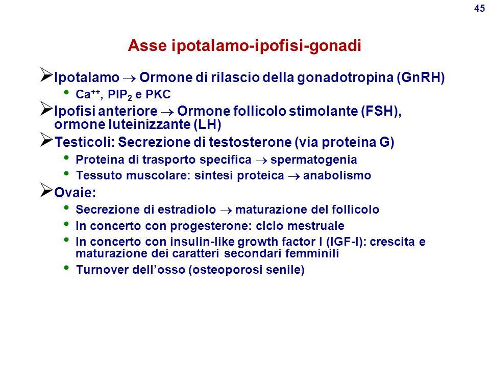 44 Mineralocorticoidi  Sotto controllo del sistema renina-angiotensina Stimolato da ipotensione, dieta priva di sali Inibito da ipertensione, dieta r