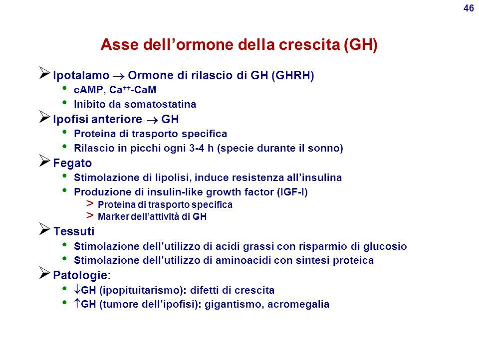 45 Asse ipotalamo-ipofisi-gonadi  Ipotalamo  Ormone di rilascio della gonadotropina (GnRH) Ca ++, PIP 2 e PKC  Ipofisi anteriore  Ormone follicolo