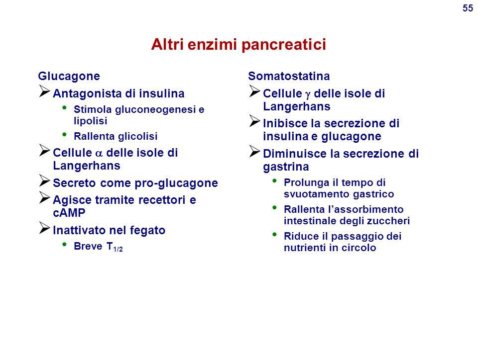 54 Altri effetti (!!!) di insulina