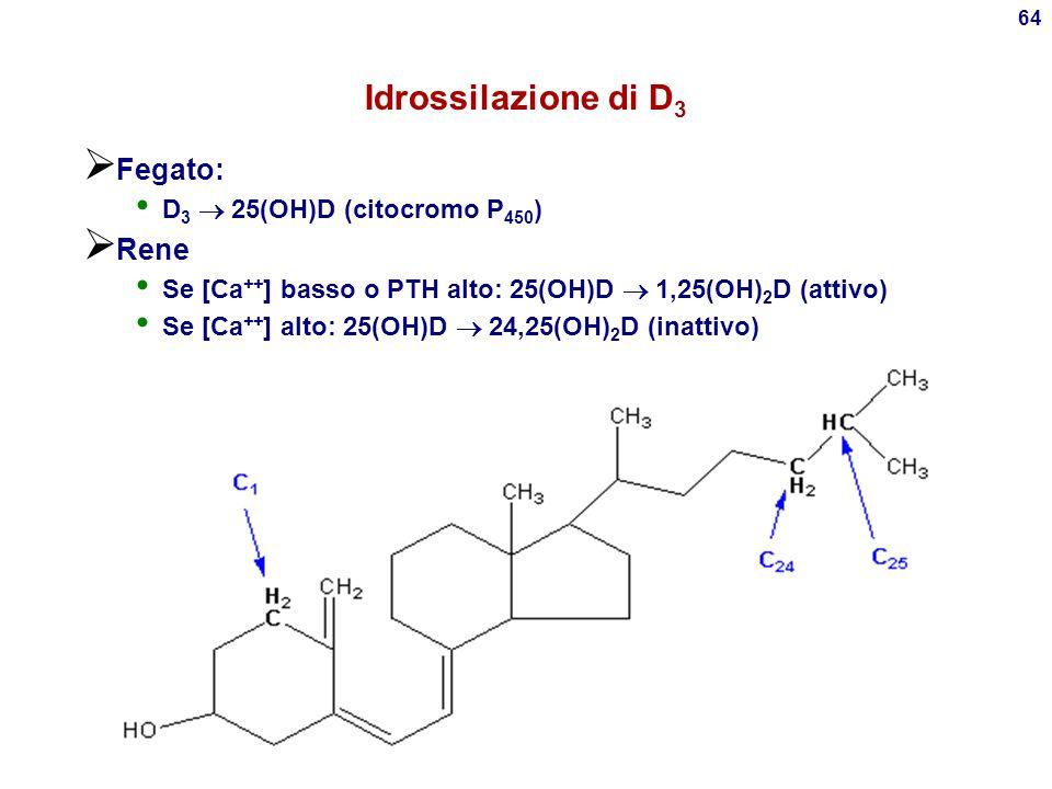 63 Vitamina D 3 (colecalciferolo o calcitriolo)  Steroide derivato da 7- deidrocolesterolo: prodotti ittici, caseari, alimenti fortificati con ergoca