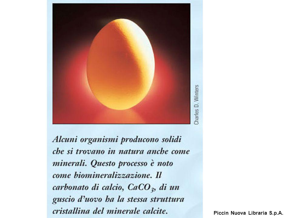 Alcuni organismi producono solidi che si trovano in natura anche come minerali. Piccin Nuova Libraria S.p.A.