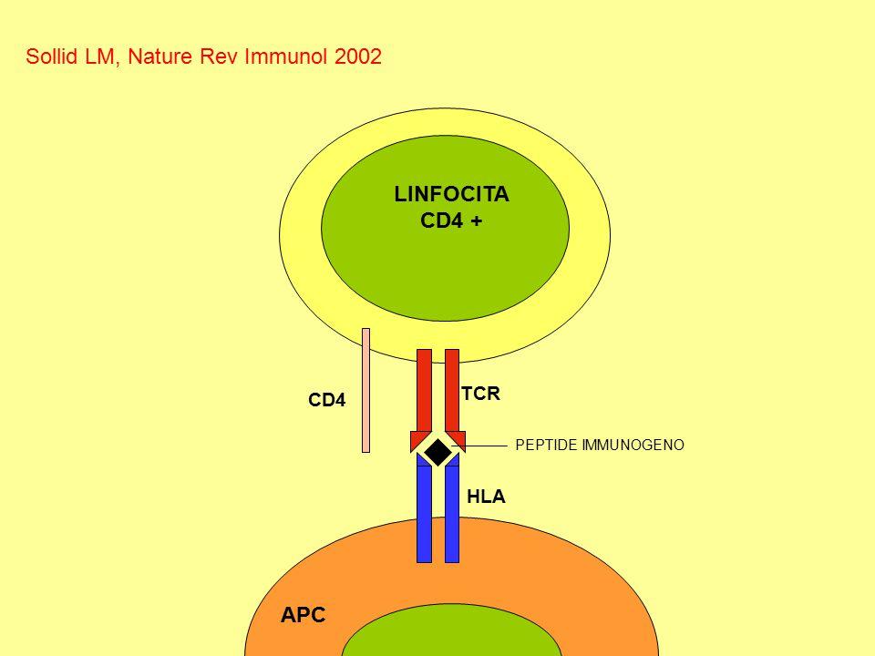 CD4 TCR HLA APC LINFOCITA CD4 + PEPTIDE IMMUNOGENO Sollid LM, Nature Rev Immunol 2002