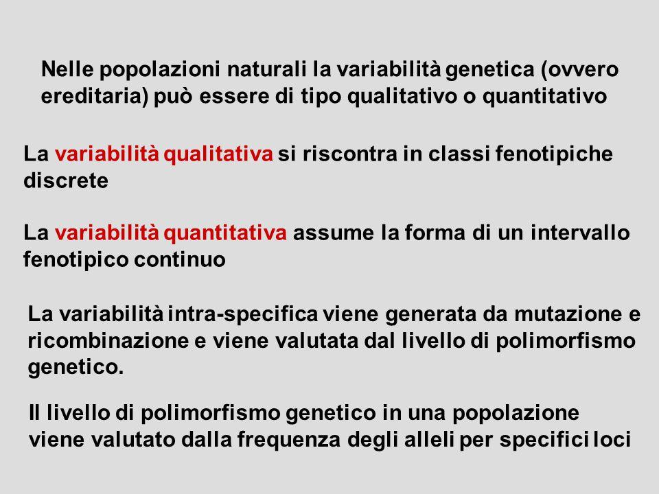 Nelle popolazioni naturali la variabilità genetica (ovvero ereditaria) può essere di tipo qualitativo o quantitativo La variabilità qualitativa si ris