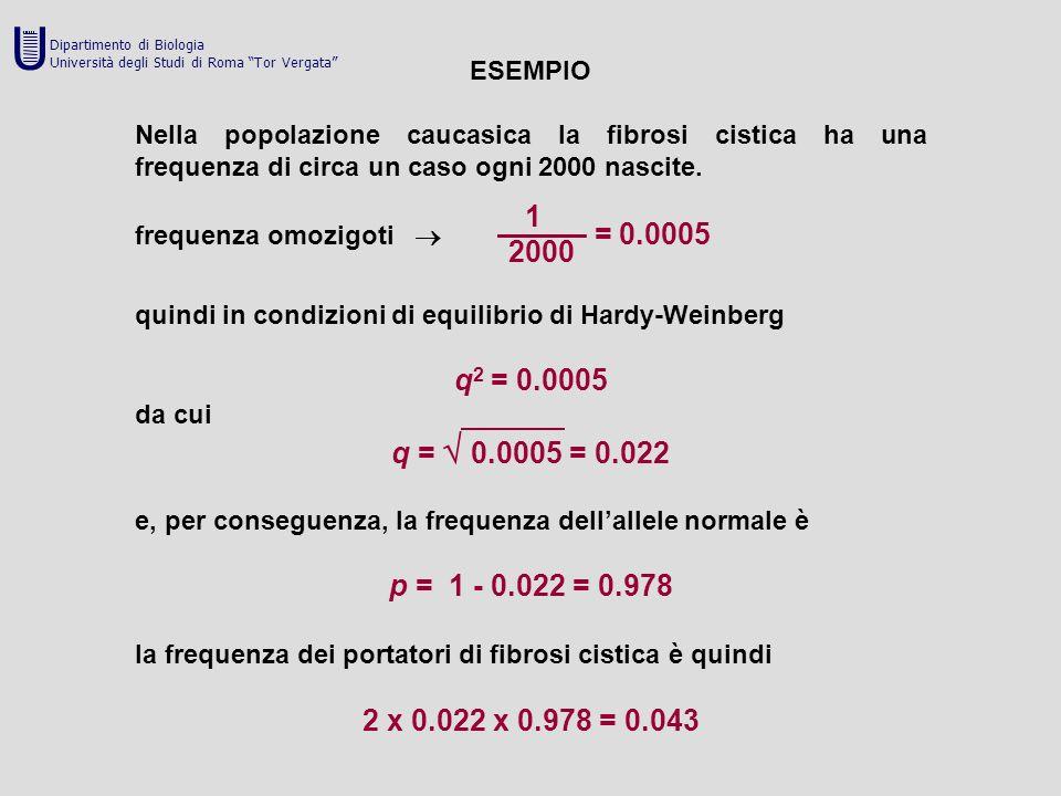 ESEMPIO Nella popolazione caucasica la fibrosi cistica ha una frequenza di circa un caso ogni 2000 nascite. 1 frequenza omozigoti  ——— = 0.0005 2000