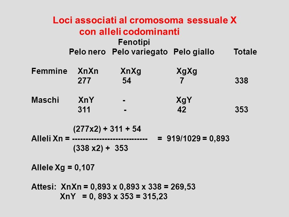 Loci associati al cromosoma sessuale X con alleli codominanti Fenotipi Pelo nero Pelo variegato Pelo giallo Totale Femmine XnXn XnXg XgXg 277 54 7 338