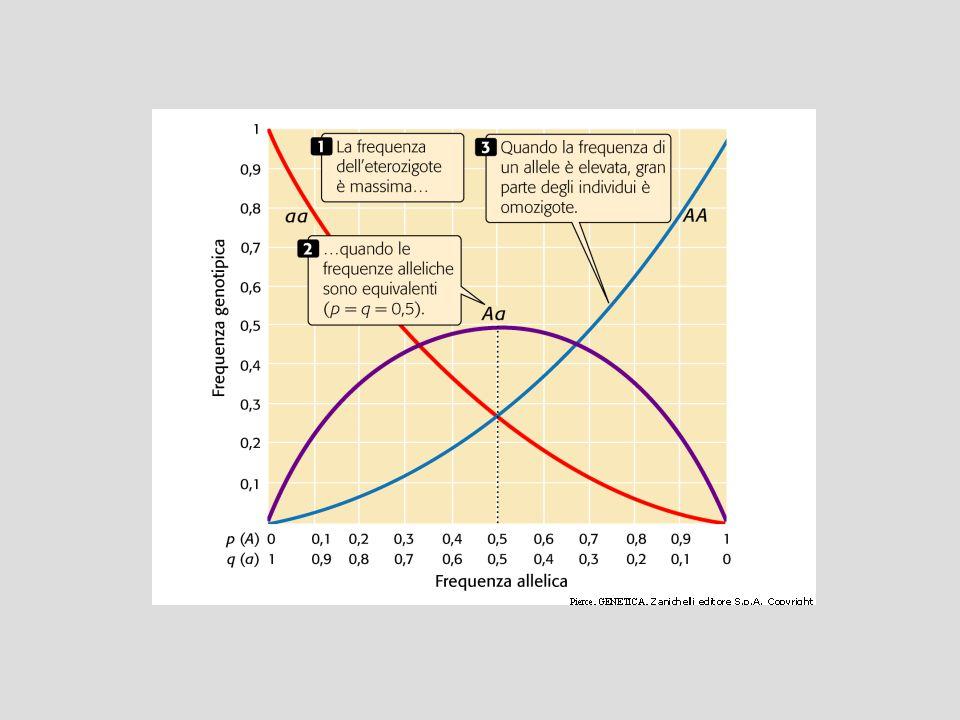 Una popolazione si dice in equilibrio di Hardy- Weinberg per un determinato locus se le sue frequenze genotipiche sono distribuite secondo la legge, o principio, di Hardy-Weinberg Se le frequenze di una popolazione vengono stimate mediante l'analisi di un campione della popolazione stessa, le frequenze genotipiche osservate possono essere diverse da quelle attese per effetto del caso.
