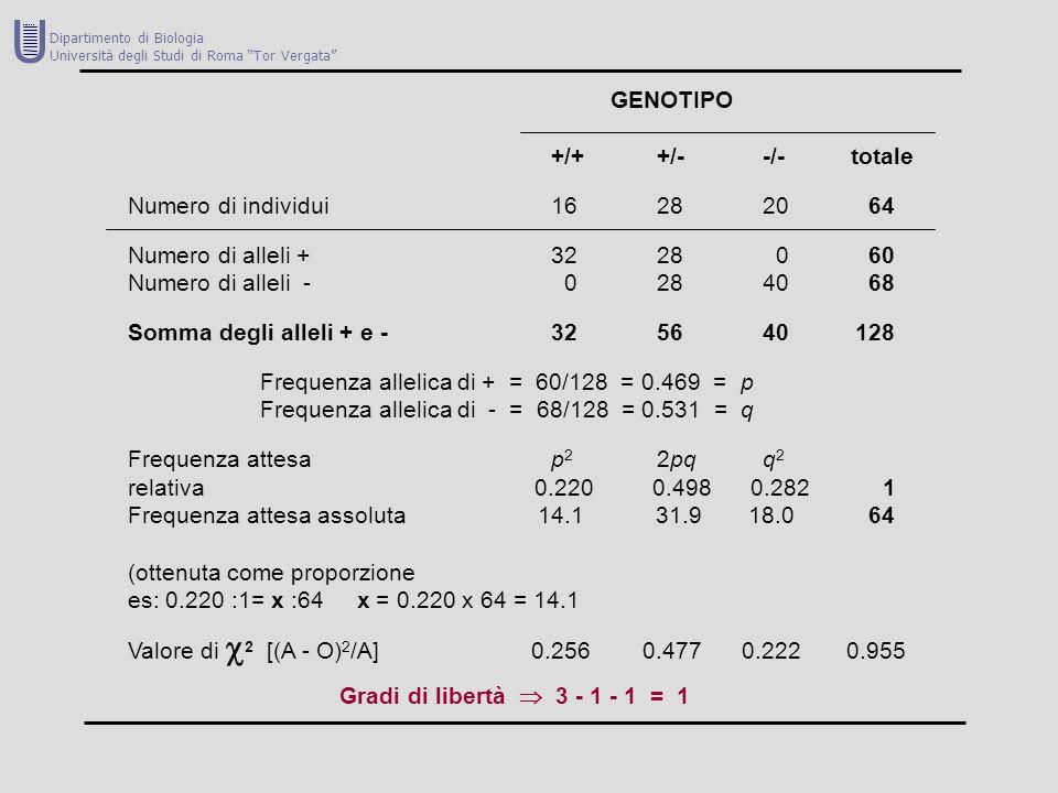 GENOTIPO +/++/--/- totale Numero di individui16282064 Numero di alleli +3228 060 Numero di alleli - 0284068 Somma degli alleli + e -325640 128 Frequen