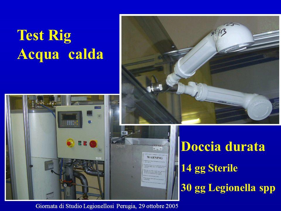 Test Rig Acqua calda Doccia durata 14 gg Sterile 30 gg Legionella spp Giornata di Studio Legionellosi Perugia, 29 ottobre 2005