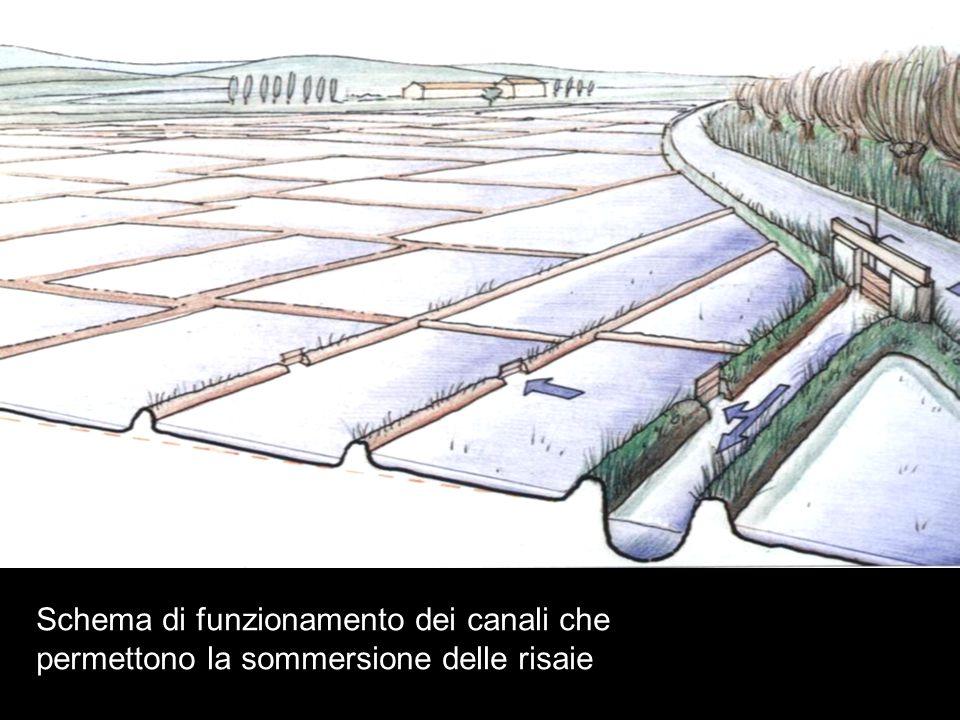 Schema di funzionamento dei canali che permettono la sommersione delle risaie