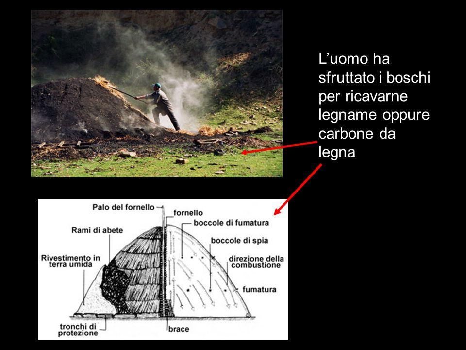 L'uomo ha sfruttato i boschi per ricavarne legname oppure carbone da legna