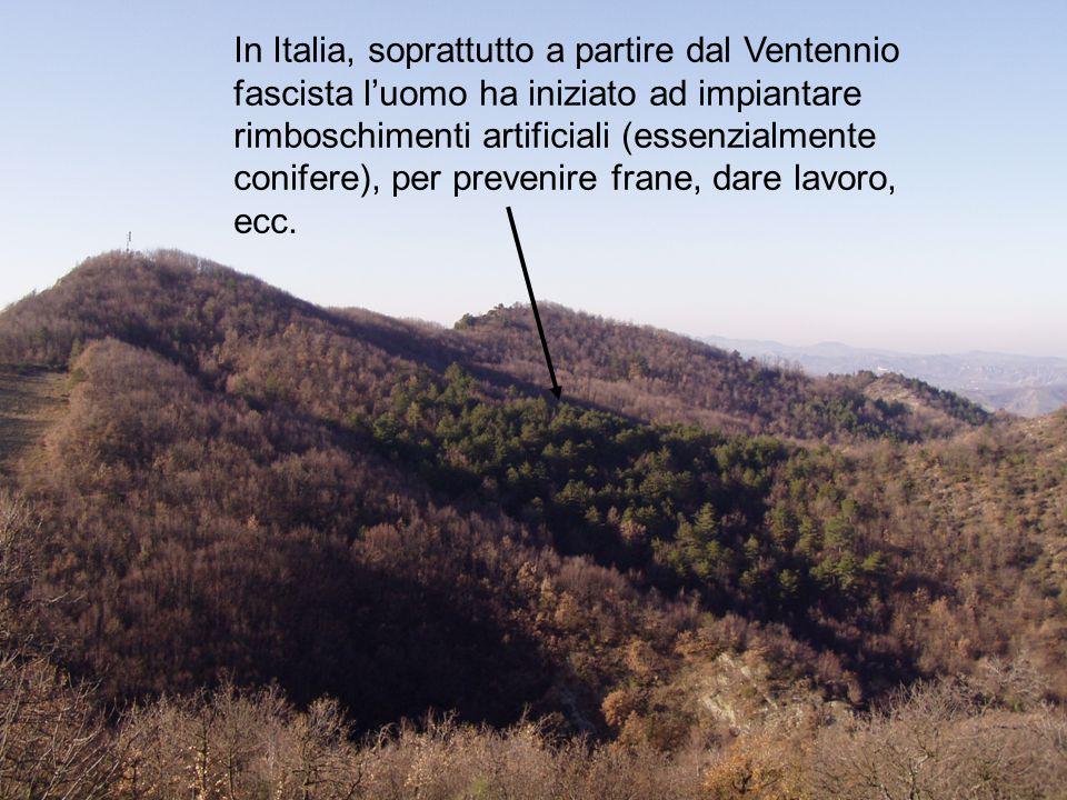 In Italia, soprattutto a partire dal Ventennio fascista l'uomo ha iniziato ad impiantare rimboschimenti artificiali (essenzialmente conifere), per pre