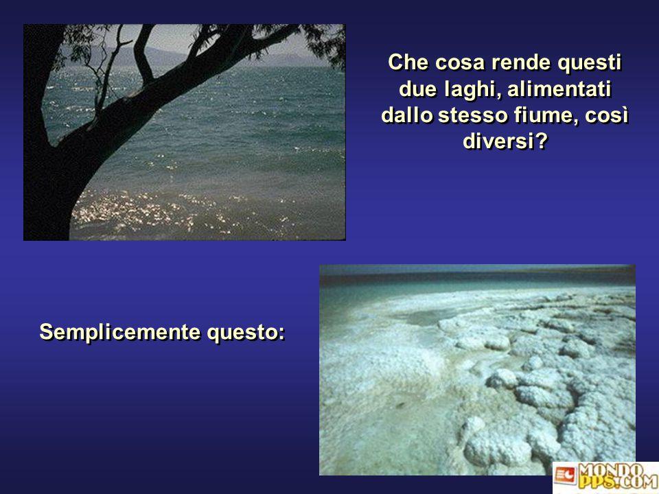 Che cosa rende questi due laghi, alimentati dallo stesso fiume, così diversi.