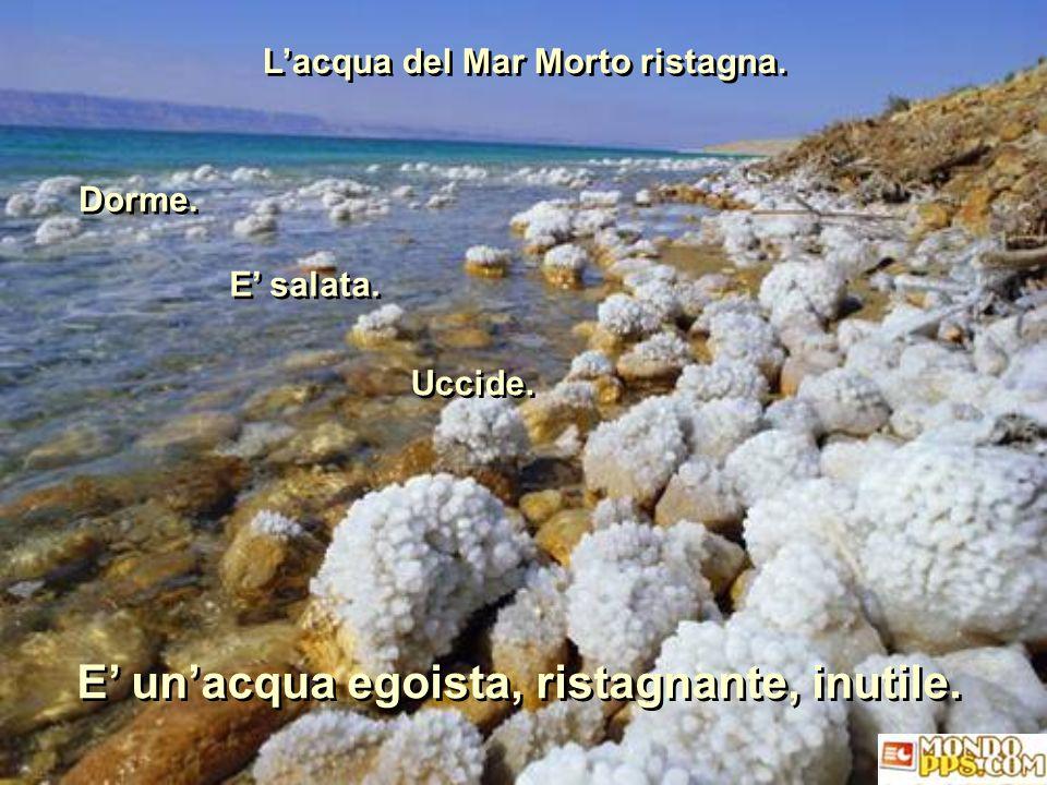 L'acqua del Mar Morto ristagna.L'acqua del Mar Morto ristagna.