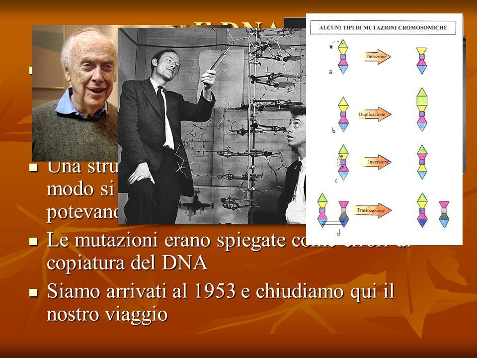 Il DNA Nel 1953 Watson e Crick riuscirono a individuare la struttura a doppia elica del DNA: ogni nucleotide posto su un filamento aveva un nucleotide complementare sull altro.