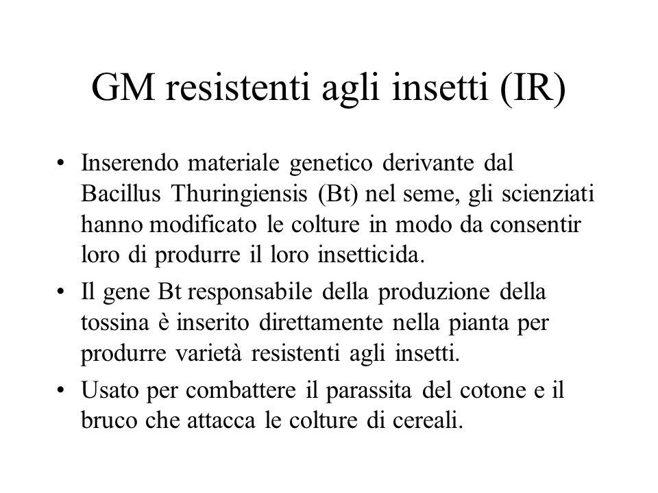 GM resistenti agli insetti (IR) Inserendo materiale genetico derivante dal Bacillus Thuringiensis (Bt) nel seme, gli scienziati hanno modificato le colture in modo da consentir loro di produrre il loro insetticida.