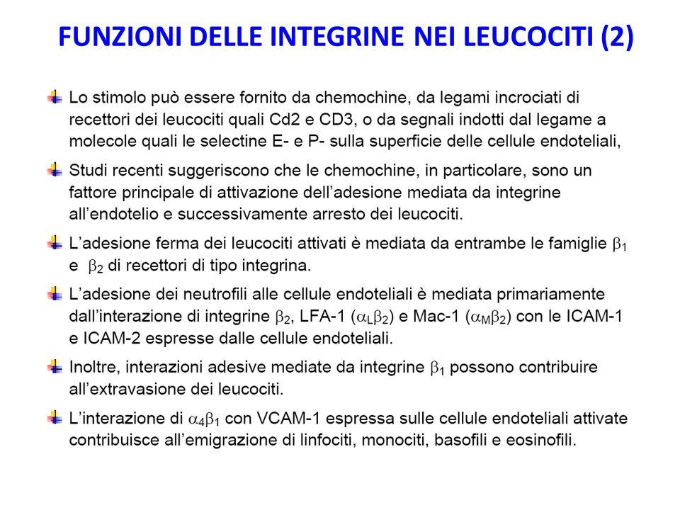 FUNZIONI DELLE INTEGRINE NEI LEUCOCITI (2)