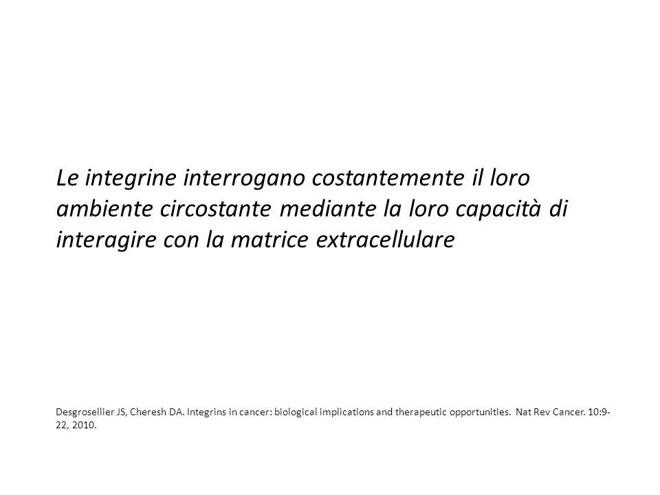 L'eterodimero delle integrine La struttura extracellulare degli eterodimeri di integrine consiste in una «testa» e in due «gambe».