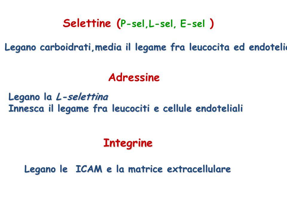 Selettine ( P-sel,L-sel, E-sel ) Legano carboidrati,media il legame fra leucocita ed endotelio Adressine Legano la L-selettina Innesca il legame fra l