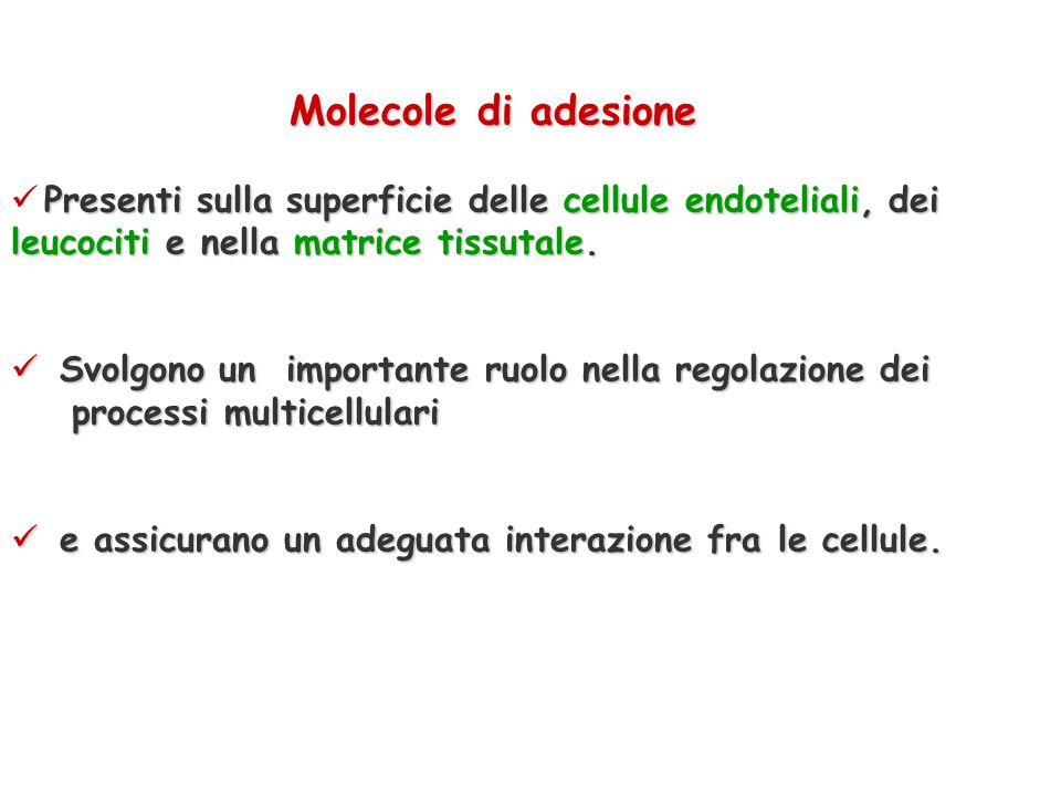 Le molecole di adesione sono presenti sulla superficie delle cellule endoteliali, dei leucociti e nella matrice tissutale. Svolgono un'importante ruol