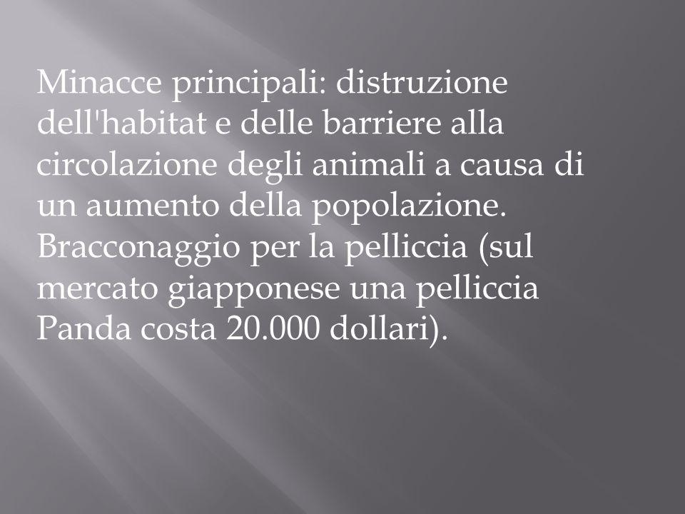 Minacce principali: distruzione dell habitat e delle barriere alla circolazione degli animali a causa di un aumento della popolazione.