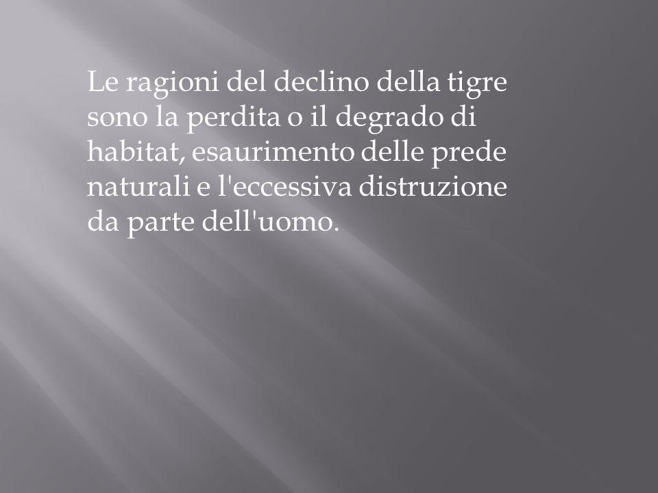 Le ragioni del declino della tigre sono la perdita o il degrado di habitat, esaurimento delle prede naturali e l eccessiva distruzione da parte dell uomo.