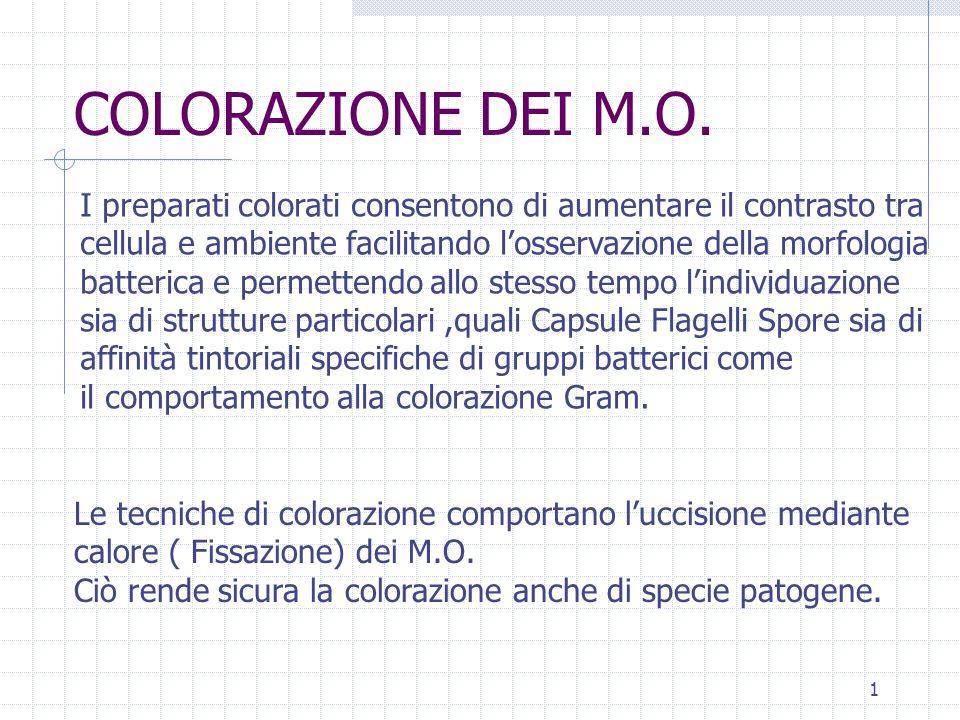 1 COLORAZIONE DEI M.O. I preparati colorati consentono di aumentare il contrasto tra cellula e ambiente facilitando l'osservazione della morfologia ba