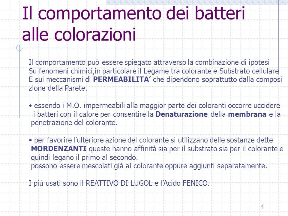 4 Il comportamento dei batteri alle colorazioni Il comportamento può essere spiegato attraverso la combinazione di ipotesi Su fenomeni chimici,in part