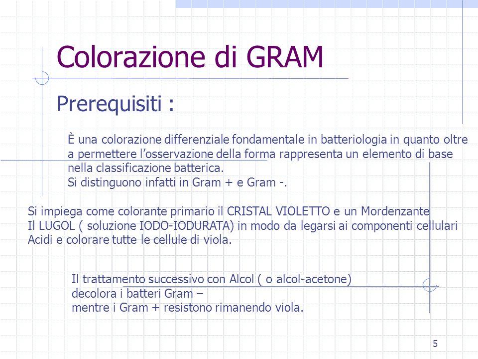 5 Colorazione di GRAM Prerequisiti : È una colorazione differenziale fondamentale in batteriologia in quanto oltre a permettere l'osservazione della forma rappresenta un elemento di base nella classificazione batterica.