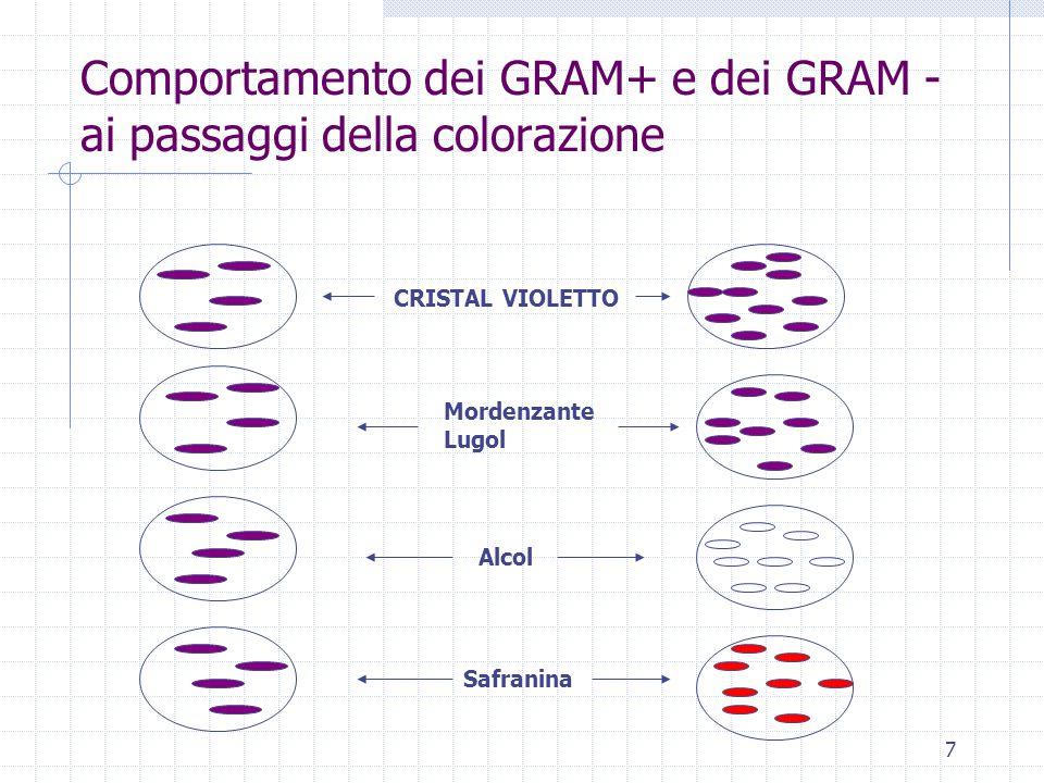 7 Comportamento dei GRAM+ e dei GRAM - ai passaggi della colorazione CRISTAL VIOLETTO Mordenzante Lugol Alcol Safranina